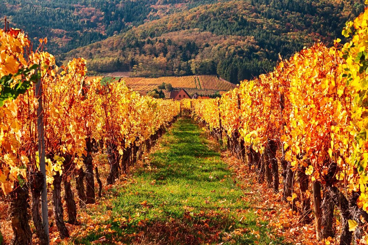 C. Haller, <c>International Online Workshop on Wine Tourism</c> - Updated CFP - EM Strasbourg